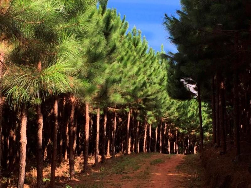 Projetos de reflorestamento